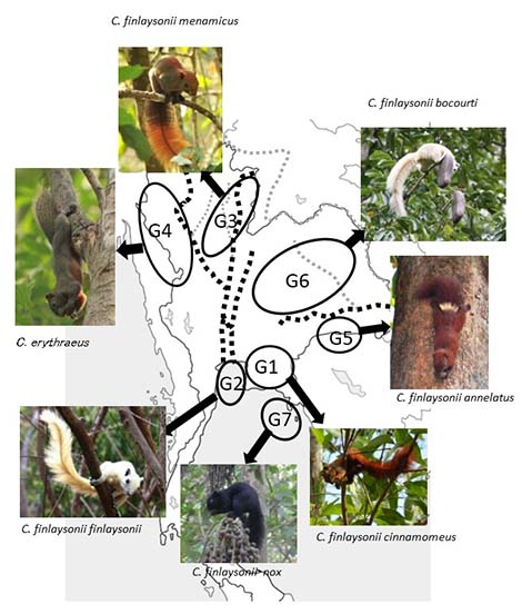 Figure:Tropical forests have colorful squirrel species that can