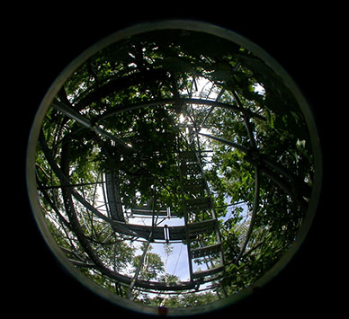 A hemispherical photograph taken inside the canopy of a mature