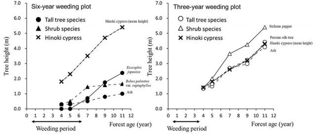 Figure. Comparison of tree height growth