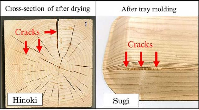 Figure 1:Image of wood cracked because