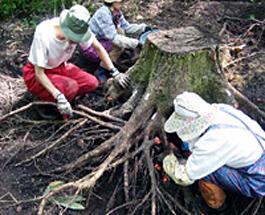 Root Biomass