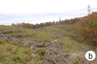 図1(b)調査地で被害地を地拵えしてヒノキを植栽している様子の写真