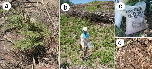 図2苗木の写真、施肥作業の様子、肥料の写真、散布した林地の写真