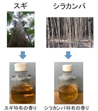 2種類の樹種から出来た発酵液の図