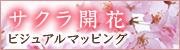サクラ開花ビジュアルマッピング