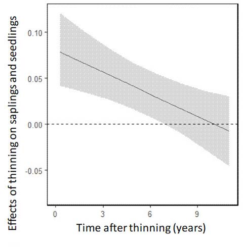 Figure. Effects of thinning on abundance of saplings and seedlin
