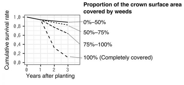 Figure: Secular change in cumulative survival rates of planted