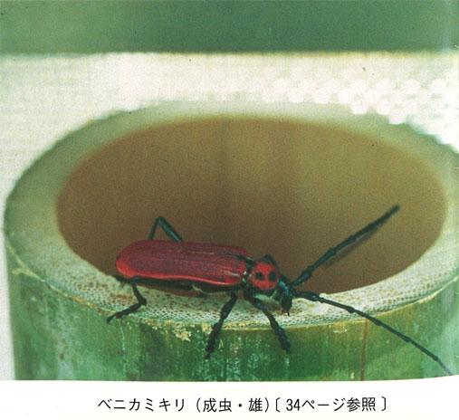 竹林・竹材害虫の生態とその防除法の確立